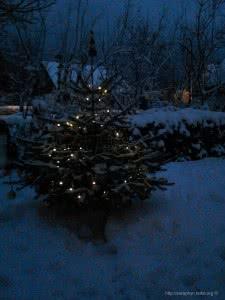 Unser Weihnachtsbaum im Jahre 2012