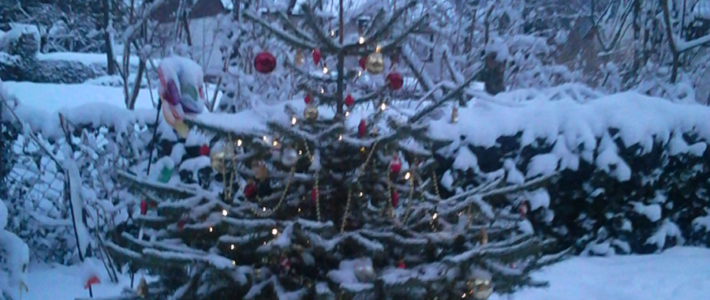 Weihnachstbaum 2012