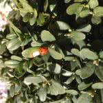 Marienkäfer im ersten Frühlingssonnenschein